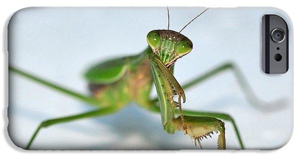 Mantodea iPhone Cases - The Shy Mantis iPhone Case by Lara Ellis