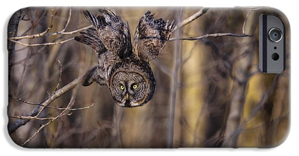 Disc iPhone Cases - The Silent Hunter iPhone Case by Gary Hall