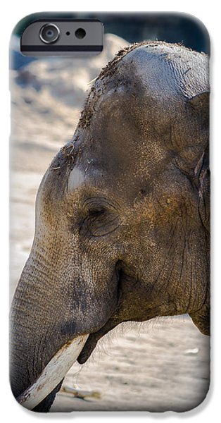 Elephants Pyrography iPhone Cases - The Smiling Elephant iPhone Case by Benjamin Jay Mueller