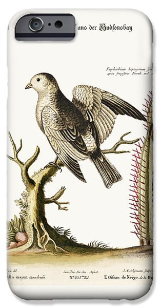 Animal Drawings iPhone Cases - The Snow-Bird from Hudsons Bay iPhone Case by Splendid Art Prints