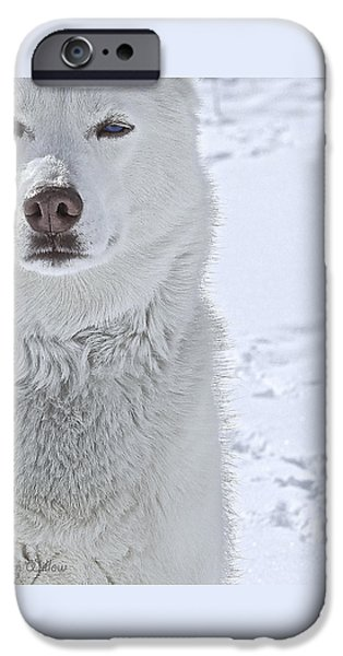 Huskies iPhone Cases - The Snow Queen - Print iPhone Case by May Finch