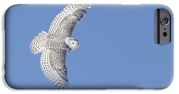 Snowy Night iPhone Cases - The Snowy Hunter iPhone Case by Mircea Costina Photography