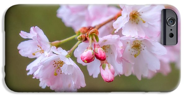Fukushima iPhone Cases - The Softness of Spring iPhone Case by Ken Stanback