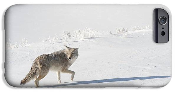 Coyote Art iPhone Cases - The Sojourn Begins iPhone Case by Sandra Bronstein