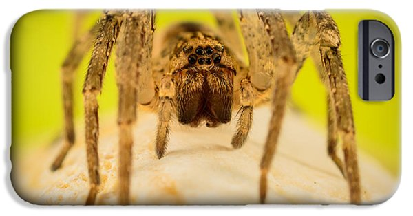 Magnification iPhone Cases - The Spider Series V iPhone Case by Marco Oliveira