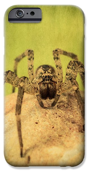 Magnification iPhone Cases - The Spider Series X iPhone Case by Marco Oliveira