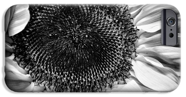Monotone iPhone Cases - The Sunflower II iPhone Case by David Patterson