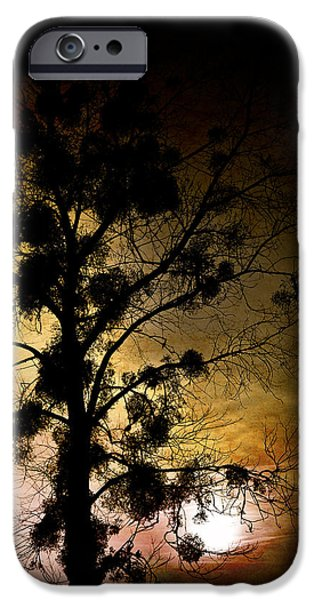 The Sunset Tree iPhone Case by Loriental Photography