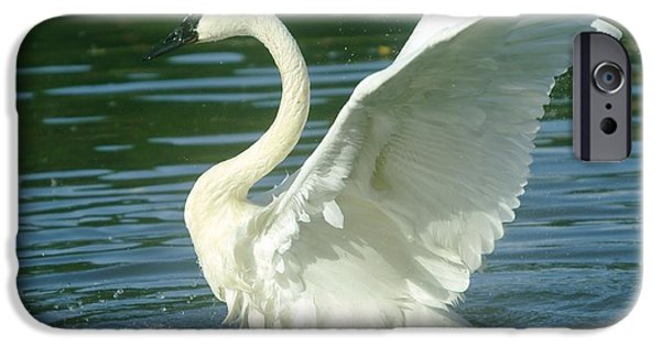 Swans... iPhone Cases - The Swan Rises  iPhone Case by Jeff  Swan