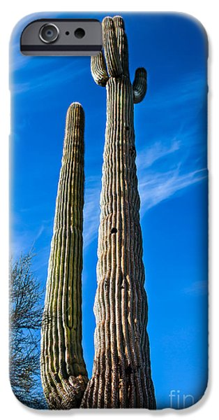 Haybale iPhone Cases - The Tall Saguaro Cactus iPhone Case by Robert Bales