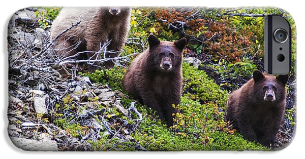 Bear Cub iPhone Cases - The Three Amigos iPhone Case by Mark Kiver