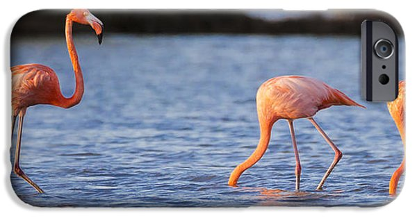 Aviary iPhone Cases - The Three Flamingos iPhone Case by Adam Romanowicz