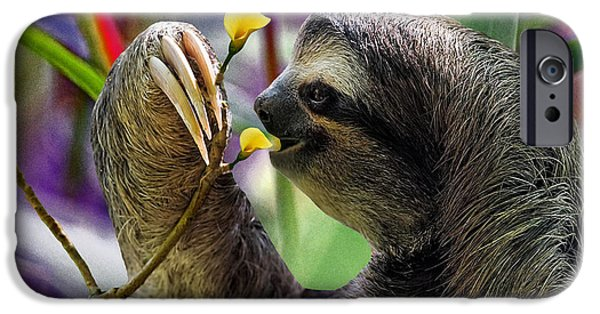 Wild Animals iPhone Cases - The Three-Toed Sloth iPhone Case by Gary Keesler