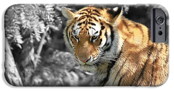 The Tiger Hunt iPhone Cases - The Tiger iPhone Case by Dan Sproul