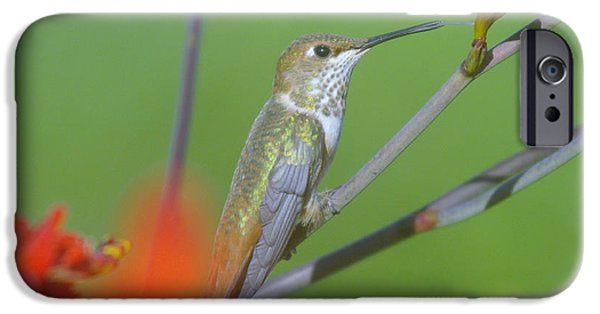The White House Photographs iPhone Cases - The tongue of a humming bird  iPhone Case by Jeff  Swan