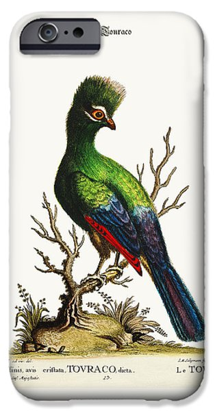 Animal Drawings iPhone Cases - The Touraco iPhone Case by Splendid Art Prints