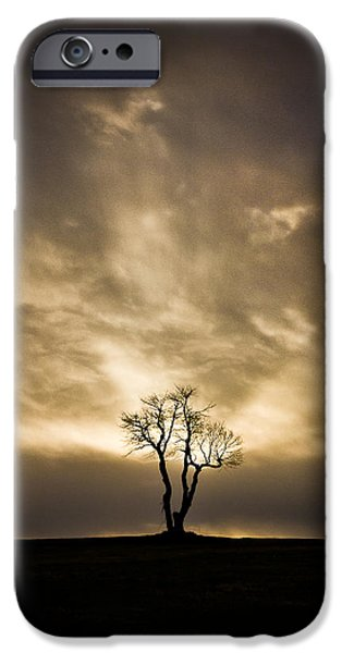 Resilience iPhone Cases - The Tree iPhone Case by Benjamin Williamson