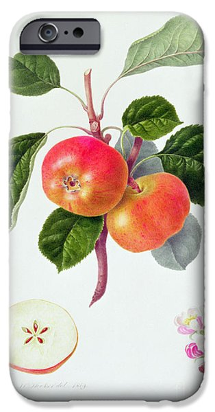 Garden iPhone Cases - The Trumpington Apple iPhone Case by William Hooker