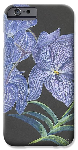 Lilacs Drawings iPhone Cases - The Vanda Orchid iPhone Case by Carol Wisniewski