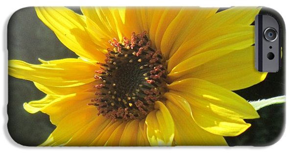Girasol iPhone Cases - The Visitor iPhone Case by John Clark