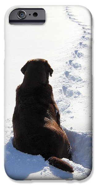 Chocolate Lab iPhone Cases - The Waiting Game iPhone Case by Davandra Cribbie