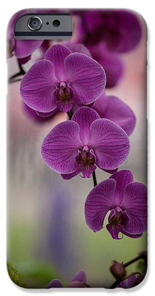 Orchid iPhone Cases - The Waiting iPhone Case by Mike Reid
