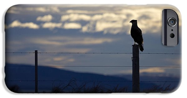 Hawk Art Print iPhone Cases - The Watcher iPhone Case by Daniel Zrno