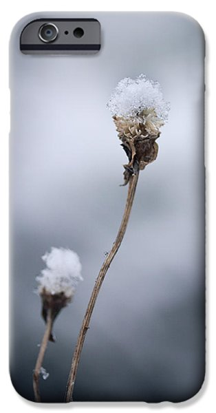 Winter iPhone Cases - The Weight Of Winter iPhone Case by Shane Holsclaw