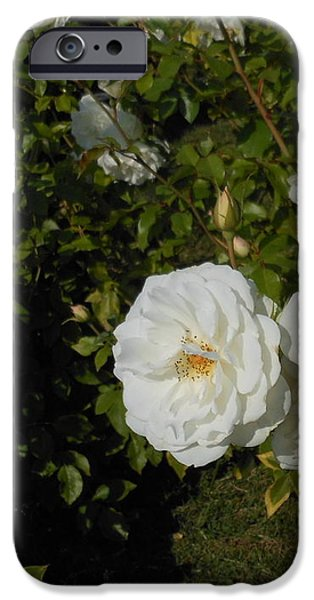 The White Rose is a Dove iPhone Case by Kay Gilley