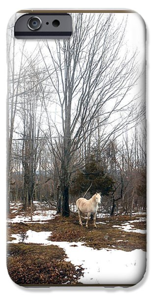 Paso Fino Stallion iPhone Cases - The White Stallion on a Snowless  Mound iPhone Case by Patricia Keller