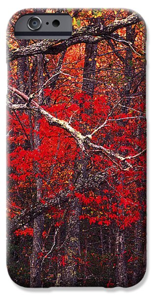 The woods aflame in red iPhone Case by Paul W Faust -  Impressions of Light