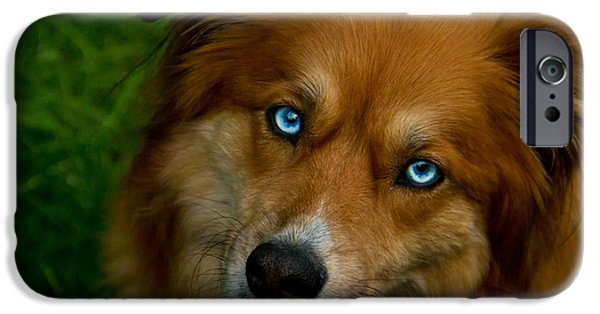 Huskies iPhone Cases - The World in my eyes iPhone Case by Eti Reid