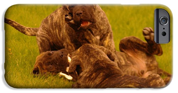 English Mastiff iPhone Cases - The Wrestling Match iPhone Case by Jeff  Swan