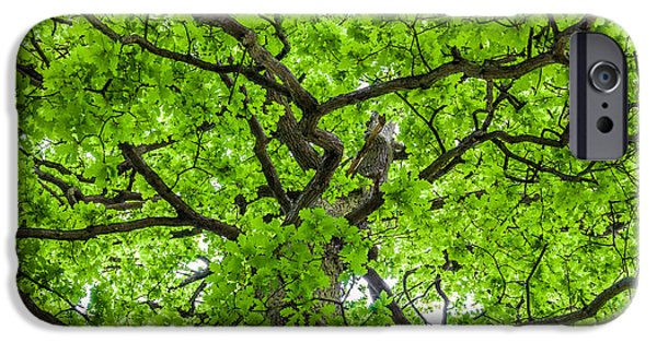 Penetration iPhone Cases - The Young Oak iPhone Case by Semmick Photo
