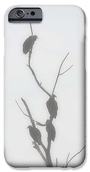 Vulture iPhone Cases - Their Waiting Four Black Vultures In Dead Tree iPhone Case by Chris Flees