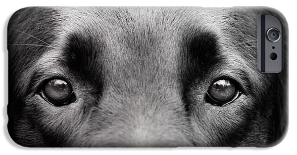 Recently Sold -  - Dog Close-up iPhone Cases - These eyes iPhone Case by Mylene O