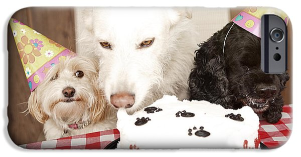 Mixed Labrador Retriever iPhone Cases - They are Eating My Cake iPhone Case by Jan Tyler