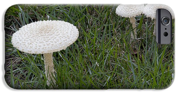 Agaricales iPhone Cases - Thiers Lepidella Mushrooms iPhone Case by Kenneth M. Highfill