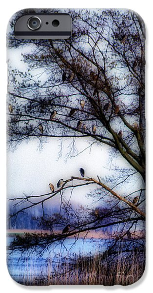 Photos Of Birds iPhone Cases - Thirty Four Night Herons iPhone Case by Skip Willits