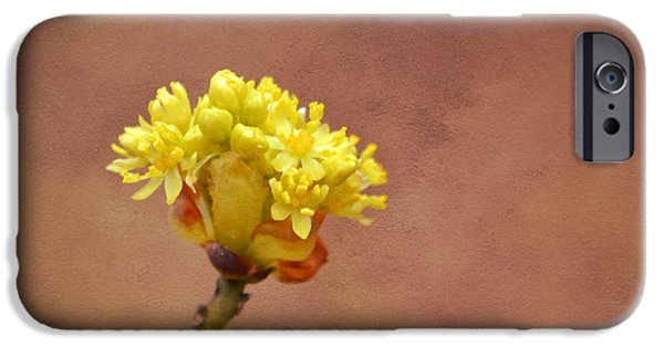 Miracle iPhone Cases - This Buds For You iPhone Case by Deena Stoddard