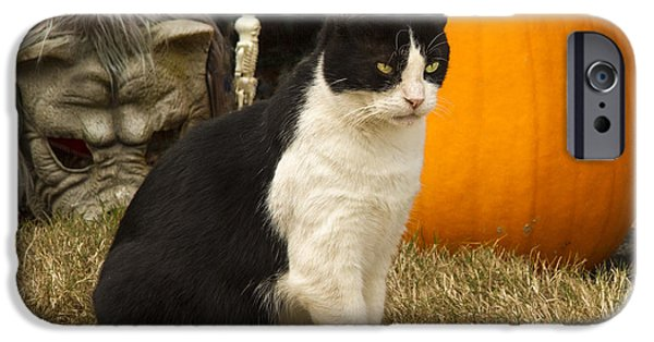 Housecat iPhone Cases - This is MY pumpkin iPhone Case by Jean Noren