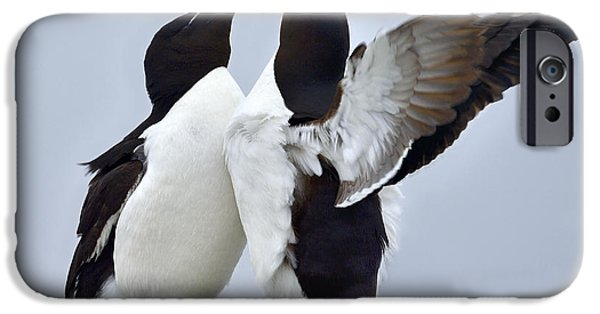 Razorbill iPhone Cases - This Much iPhone Case by Tony Beck