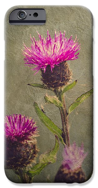 Thistle iPhone Cases - Thistle iPhone Case by Wim Lanclus