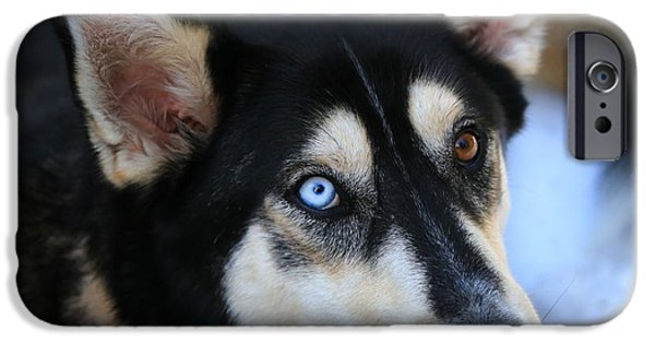 Husky iPhone Cases - Those Eyes iPhone Case by Carol Groenen