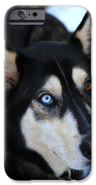 Those Eyes iPhone Case by Carol Groenen