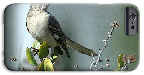 Mockingbird iPhone Cases - Thou Shalt Not Mock iPhone Case by Fraida Gutovich