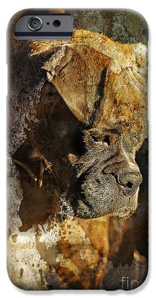 Boxer Dog iPhone Cases - Thought Process iPhone Case by Judy Wood