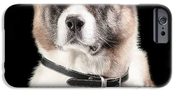 Puppies iPhone Cases - Thoughtful Akita iPhone Case by Aida Hall