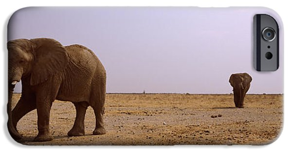 Elephants iPhone Cases - Three African Elephants Loxodonta iPhone Case by Panoramic Images