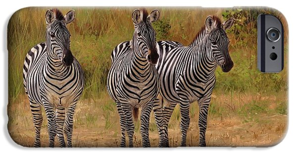 Zebra iPhone Cases - Three Amigos iPhone Case by David Stribbling